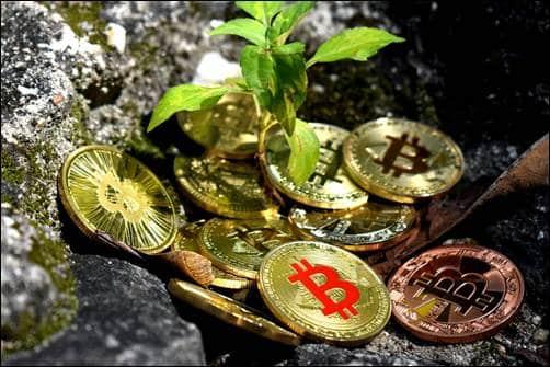 Crypto Exchange Brands